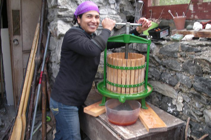 Graciela, a Wwoofer from Mexico, pressing Daisy Cottage apples in the old bothy