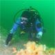 diver 80x80