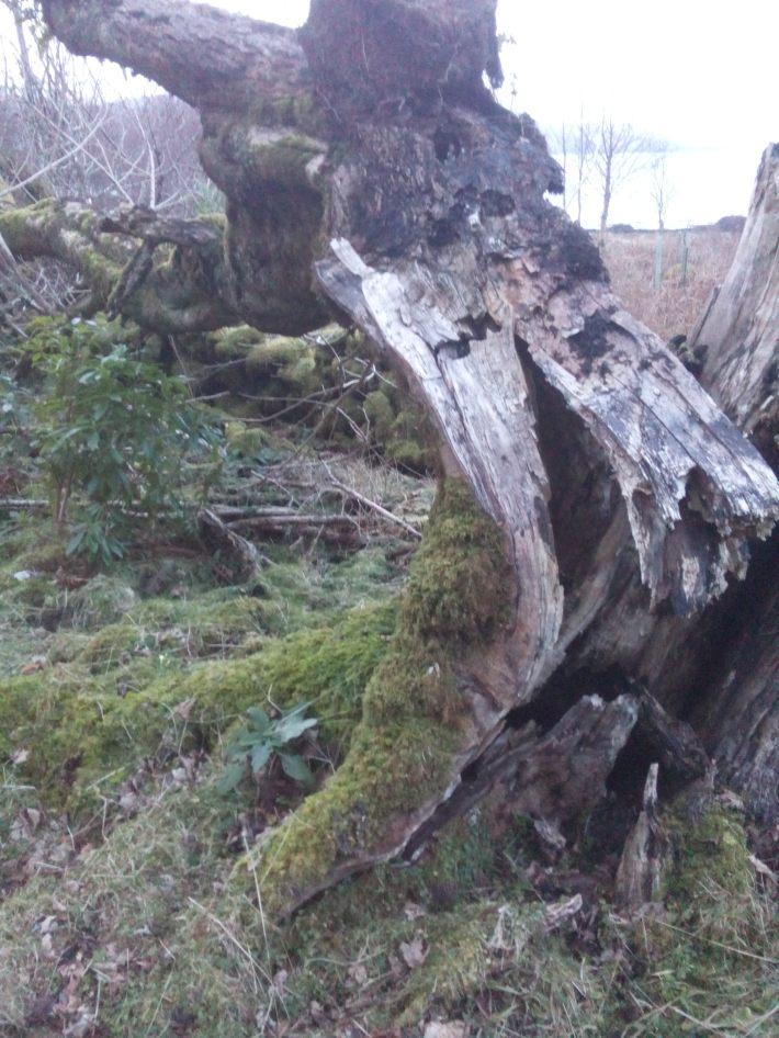 duart castle ash storm damage