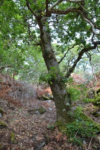 blog oak june20